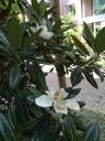 花瓣托住開始凋落的花蕊