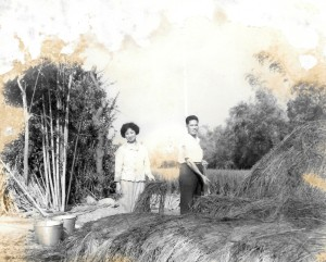 30 歲的父母,翻修稻草堆肥種洋菇