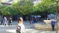 塞維亞大教堂內的橘樹