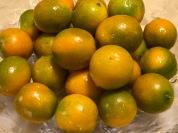 楊家一口柑:有黃有橙也有綠