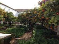 西班牙塞維亞的橘園和檸檬樹