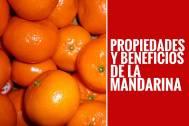 滿州橘:中國橘