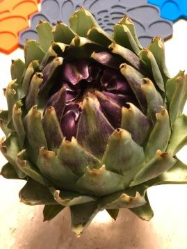 剛摘拾時綠紫鮮豔的朝鮮薊