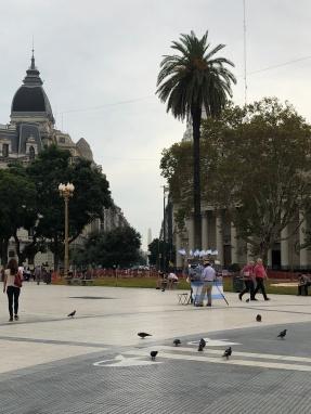 五月廣場 (Plaza de Mayo):鴿子悠閒地覓食