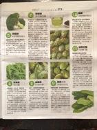 報紙也開始介紹朝鮮薊了。